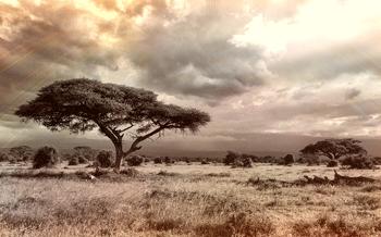 The Perfect Getaway in Kenya