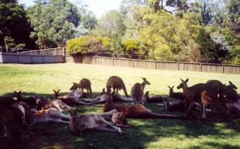 The Social Area - where kangaroos mingle at the centre