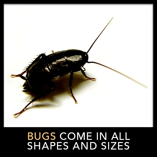 Bugs Come in All Shapes and Sizes
