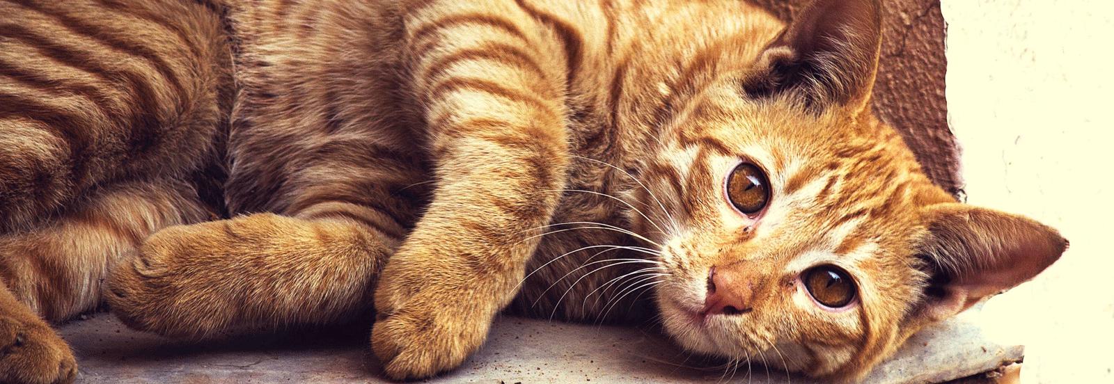 Cat Surveillance